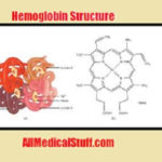 Types of hemoglobin