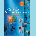 Snell neuroanatomy pdf Review & Best Deals
