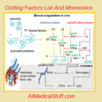 13 clotting factors and mnemonics
