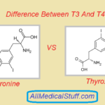 Differences Between T3 And T4