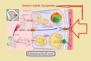 sodium iodide symporter