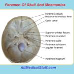 foramen of skull