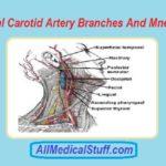 external carotid artery branches mnemonics